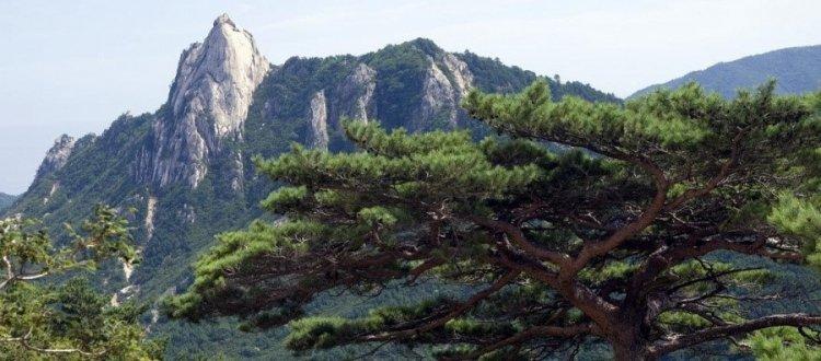 Природа Северной Кореи